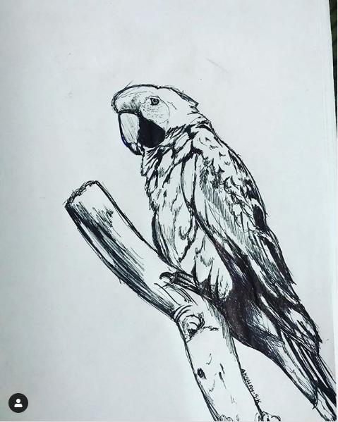 Fake parrot